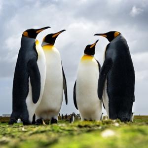 Linkbuilding und Google Penguin UpDate